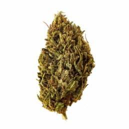 2x1 Cogollo de Flor Aromática de CBD al 16,49% · La Cordobesa
