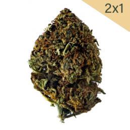 2x1 Cogollo de Flor Aromática de CBD con 10% · La Cordobesa Helada