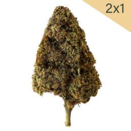 Cogollo de Flor Aromática de CBD al 13% · La Cordobesa Legal · CL13
