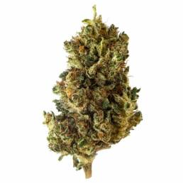 Cogollo de Flor Aromática de CBD al 23,58% · La Cordobesa Limonera