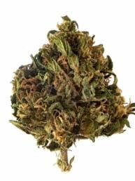 Cogollo de Flor de CBG 8% · La Cordobesa Cannabigerol
