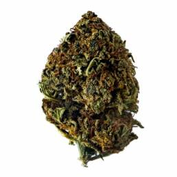Cogollo de Flor Aromática de CBD con 10% · La Cordobesa Helada