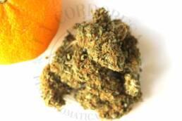 Cogollo de Flor Aromática de CBD al 12% · La Cordobesa Naranjita